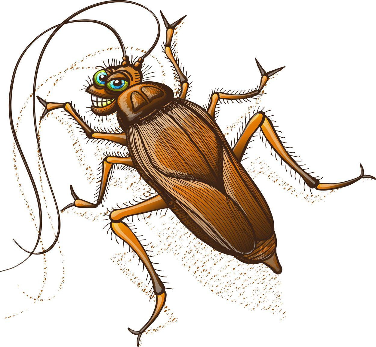 Cucaracha