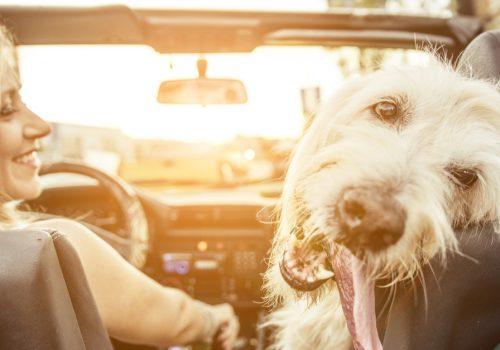 ¿Cómo llevar a tu perro cuando viaja en el auto?